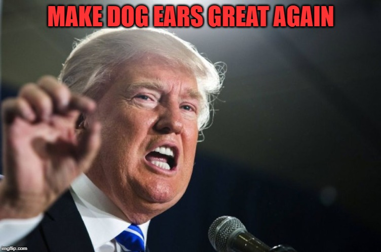 donald trump | MAKE DOG EARS GREAT AGAIN | image tagged in donald trump | made w/ Imgflip meme maker