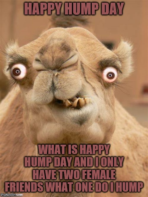 happy hump day | HAPPY HUMP DAY WHAT IS HAPPY HUMP DAY AND I ONLY HAVE TWO FEMALE FRIENDS WHAT ONE DO I HUMP | image tagged in ugly camel,happy hump day,hump day camel,meme,memes,funny animals | made w/ Imgflip meme maker