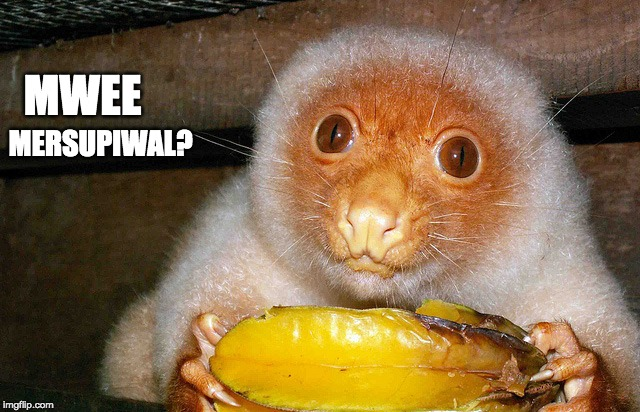 Marsupial | MWEE MERSUPIWAL? | image tagged in cute,funny animals | made w/ Imgflip meme maker