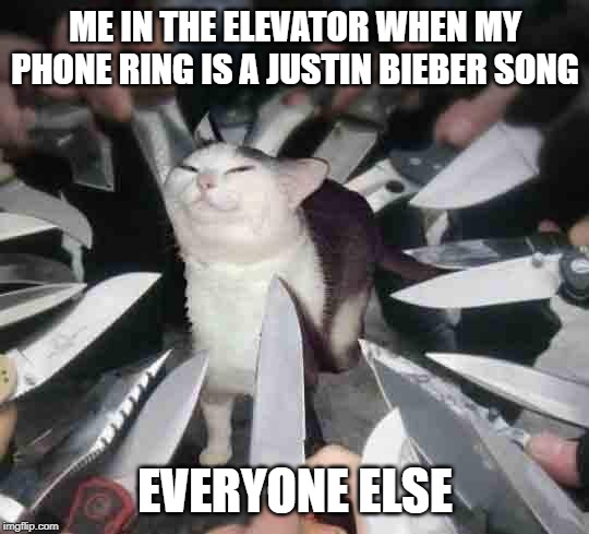 Knife Cat | ME IN THE ELEVATOR WHEN MY PHONE RING IS A JUSTIN BIEBER SONG EVERYONE ELSE | image tagged in knife cat | made w/ Imgflip meme maker