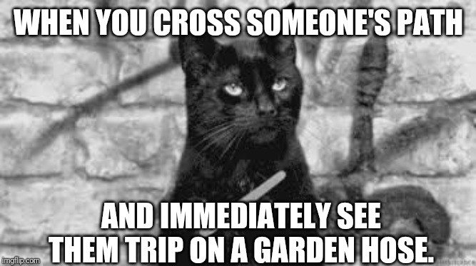 WHEN YOU CROSS SOMEONE'S PATH AND IMMEDIATELY SEE THEM TRIP ON A GARDEN HOSE. | image tagged in black cat | made w/ Imgflip meme maker