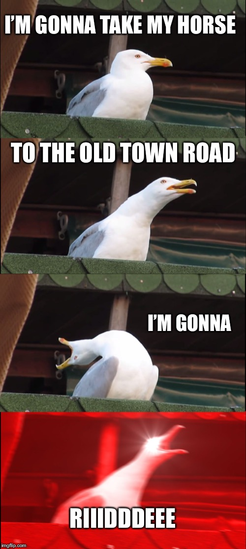 Inhaling Seagull | I'M GONNA TAKE MY HORSE TO THE OLD TOWN ROAD I'M GONNA RIIIDDDEEE | image tagged in memes,inhaling seagull | made w/ Imgflip meme maker