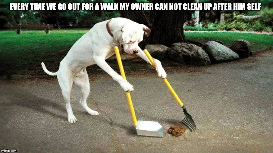 lazy dog owner | EVERY TIME WE GO OUT FOR A WALK MY OWNER CAN NOT CLEAN UP AFTER HIM SELF | image tagged in funny dog,funny dogs,funny animals,lol so funny,meme,memes | made w/ Imgflip meme maker