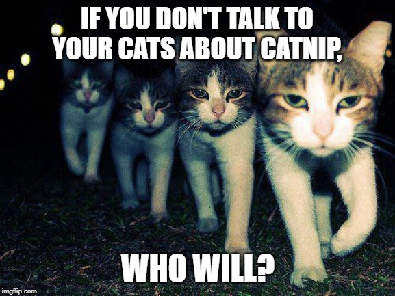 Wrong Neighboorhood Cats | IF YOU DON'T TALK TO YOUR CATS ABOUT CATNIP, WHO WILL? | image tagged in memes,wrong neighboorhood cats | made w/ Imgflip meme maker