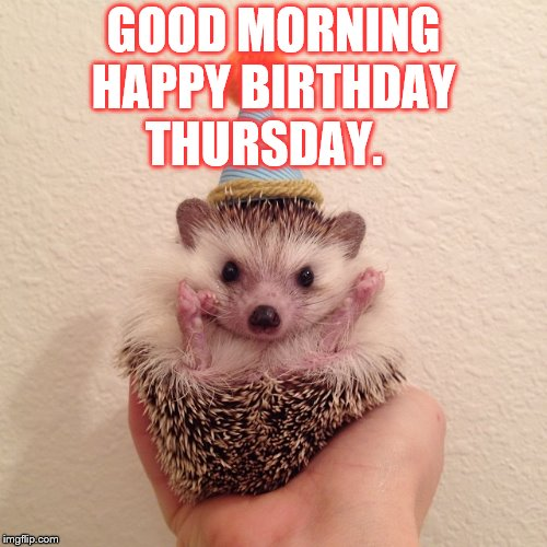 good morning | GOOD MORNING HAPPY BIRTHDAY THURSDAY. | image tagged in happy thursday,thursday,memes,funny animals,happy birthday | made w/ Imgflip meme maker