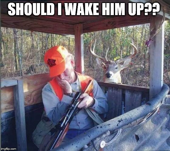Should i wake him up?? | SHOULD I WAKE HIM UP?? | image tagged in deer hunter,wake up,memes,deer,funny animals | made w/ Imgflip meme maker