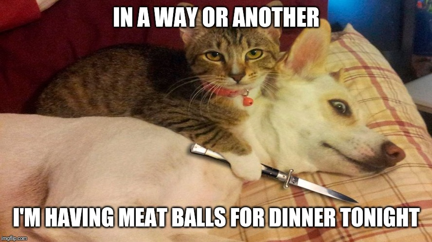 Capish? | IN A WAY OR ANOTHER I'M HAVING MEAT BALLS FOR DINNER TONIGHT | image tagged in cat,funny | made w/ Imgflip meme maker