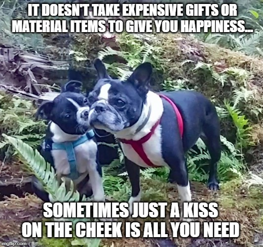 IT DOESN'T TAKE EXPENSIVE GIFTS OR MATERIAL ITEMS TO GIVE YOU HAPPINESS... SOMETIMES JUST A KISS ON THE CHEEK IS ALL YOU NEED | image tagged in lippy-the-boston | made w/ Imgflip meme maker