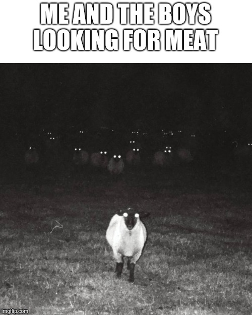 Creepy sheep | ME AND THE BOYS LOOKING FOR MEAT | image tagged in creepy sheep | made w/ Imgflip meme maker
