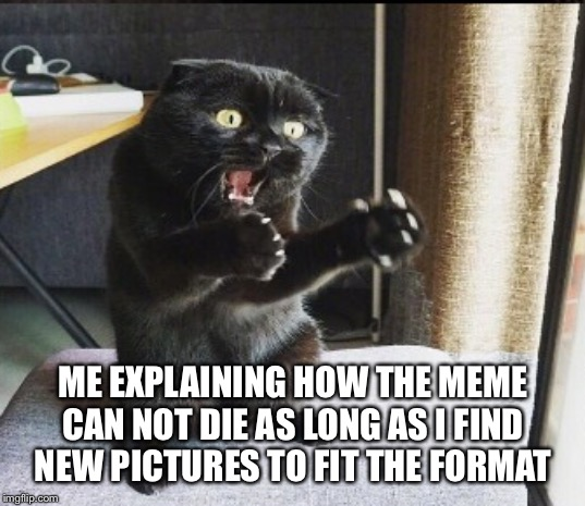 The meme cannot die | ME EXPLAINING HOW THE MEME CAN NOT DIE AS LONG AS I FIND NEW PICTURES TO FIT THE FORMAT | image tagged in trying to explain,cat,memes,fresh | made w/ Imgflip meme maker