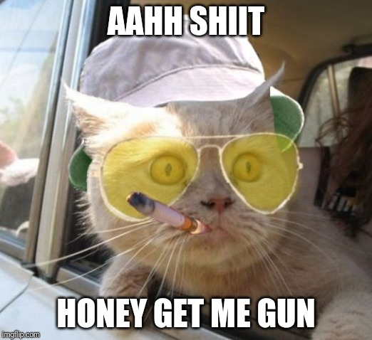 Fear And Loathing Cat Meme | AAHH SHIIT HONEY GET ME GUN | image tagged in memes,fear and loathing cat | made w/ Imgflip meme maker