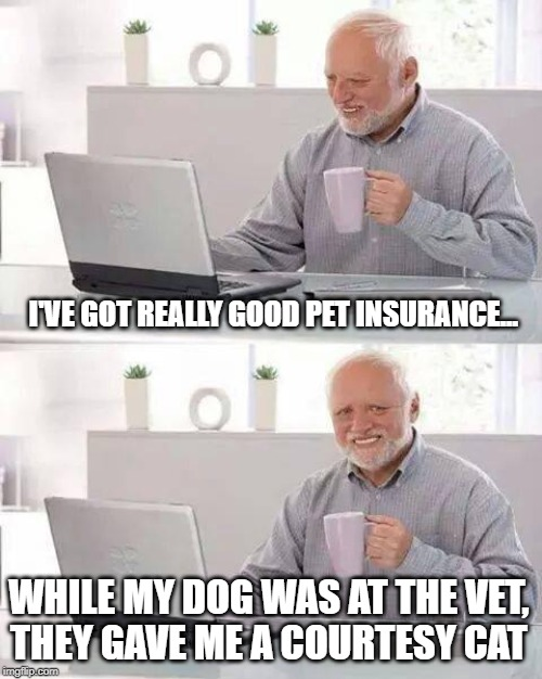 Hide the Pain Harold Meme | I'VE GOT REALLY GOOD PET INSURANCE... WHILE MY DOG WAS AT THE VET,  THEY GAVE ME A COURTESY CAT | image tagged in memes,hide the pain harold | made w/ Imgflip meme maker