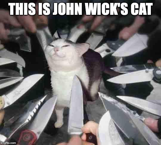 Knife Cat | THIS IS JOHN WICK'S CAT | image tagged in knife cat | made w/ Imgflip meme maker