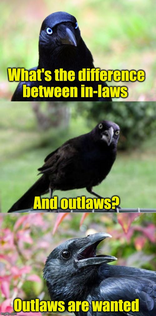 Dead or Alive | What's the difference between in-laws And outlaws? Outlaws are wanted | image tagged in bad pun crow,memes,puns,wanted poster,cowboy wisdom,craziness_all_the_way | made w/ Imgflip meme maker