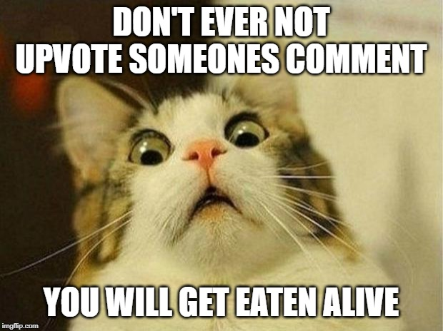 I made that mistake when I was newer...never again...never again | DON'T EVER NOT UPVOTE SOMEONES COMMENT YOU WILL GET EATEN ALIVE | image tagged in memes,scared cat | made w/ Imgflip meme maker