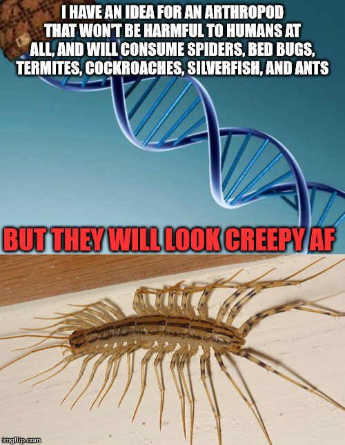 Evolution be like: | I HAVE AN IDEA FOR AN ARTHROPOD THAT WON'T BE HARMFUL TO HUMANS AT ALL, AND WILL CONSUME SPIDERS, BED BUGS, TERMITES, COCKROACHES, SILVERFIS | image tagged in scumbag dna | made w/ Imgflip meme maker