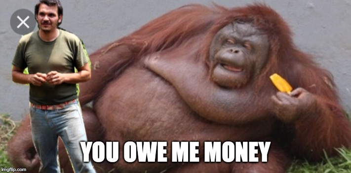 monkey | YOU OWE ME MONEY | image tagged in monkey | made w/ Imgflip meme maker