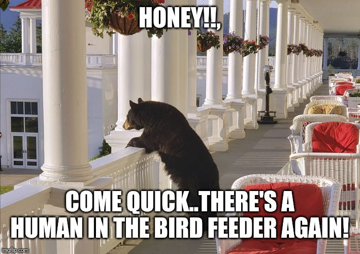 HONEY!!, COME QUICK..THERE'S A HUMAN IN THE BIRD FEEDER AGAIN! | image tagged in balcony bear | made w/ Imgflip meme maker