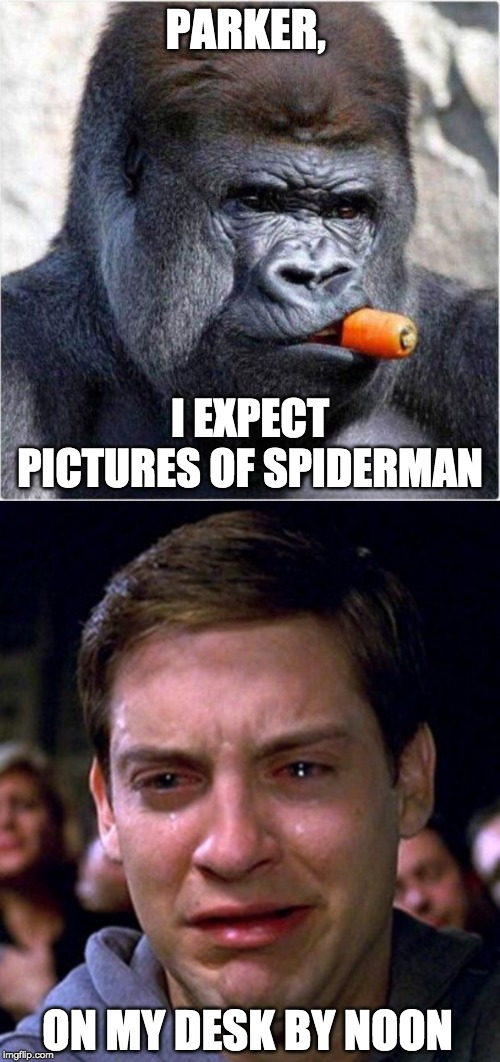 Gorilla looks like J. Jonah Jameson | PARKER, ON MY DESK BY NOON I EXPECT PICTURES OF SPIDERMAN | image tagged in crying peter parker,j jonah jameson gorilla | made w/ Imgflip meme maker