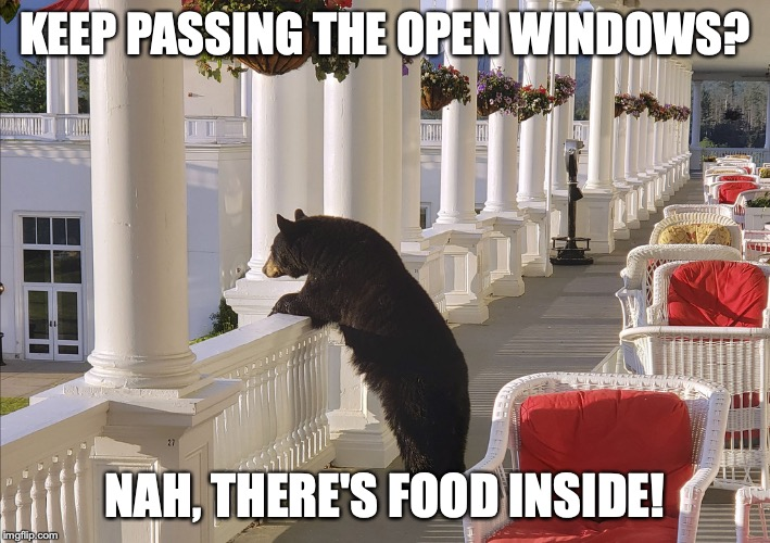 KEEP PASSING THE OPEN WINDOWS? NAH, THERE'S FOOD INSIDE! | image tagged in balcony bear | made w/ Imgflip meme maker
