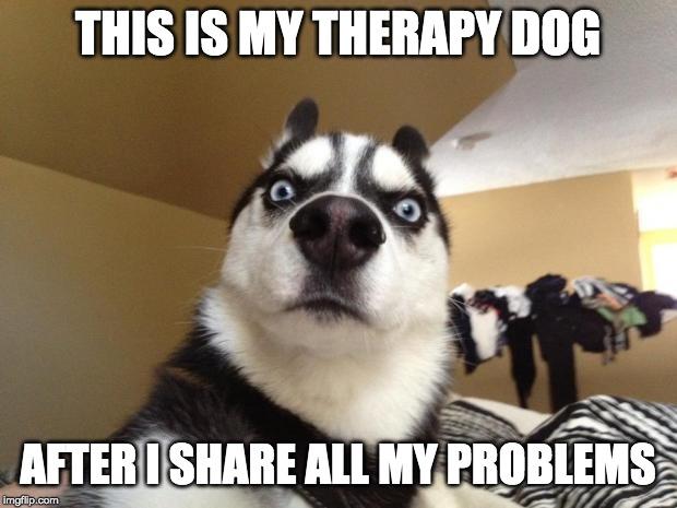 Shocked Dog Imgflip
