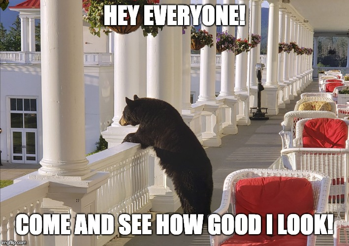 HEY EVERYONE! COME AND SEE HOW GOOD I LOOK! | image tagged in balcony bear | made w/ Imgflip meme maker