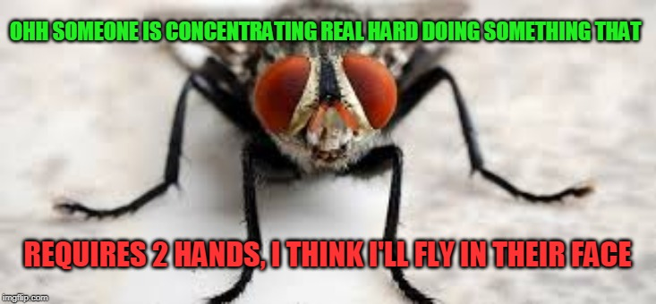 Every Time | OHH SOMEONE IS CONCENTRATING REAL HARD DOING SOMETHING THAT REQUIRES 2 HANDS, I THINK I'LL FLY IN THEIR FACE | image tagged in fly,fly pest | made w/ Imgflip meme maker