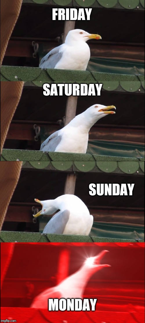 Inhaling Seagull | FRIDAY SATURDAY SUNDAY MONDAY | image tagged in memes,inhaling seagull | made w/ Imgflip meme maker