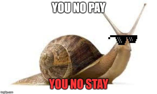 YOU NO PAY YOU NO STAY | image tagged in snail,thug life | made w/ Imgflip meme maker