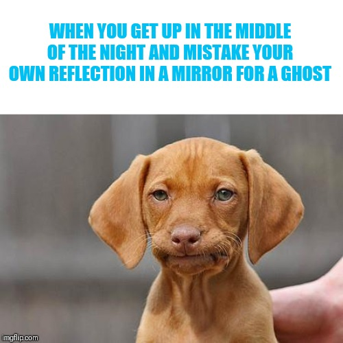 I blame thparky | WHEN YOU GET UP IN THE MIDDLE OF THE NIGHT AND MISTAKE YOUR OWN REFLECTION IN A MIRROR FOR A GHOST | image tagged in dissapointed puppy,you thought it was a ghost but it was me timiddeer,thparky | made w/ Imgflip meme maker