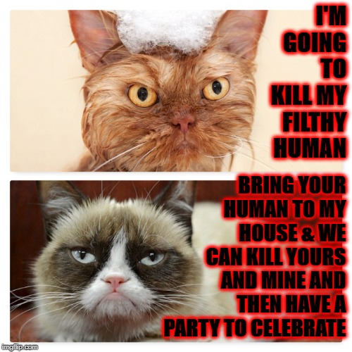 I'M GOING TO KILL MY FILTHY HUMAN BRING YOUR HUMAN TO MY HOUSE & WE CAN KILL YOURS AND MINE AND THEN HAVE A PARTY TO CELEBRATE | image tagged in murder party | made w/ Imgflip meme maker