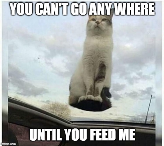 FEED ME | YOU CAN'T GO ANY WHERE UNTIL YOU FEED ME | image tagged in cats,cat,funny cats,funny,cute cat | made w/ Imgflip meme maker