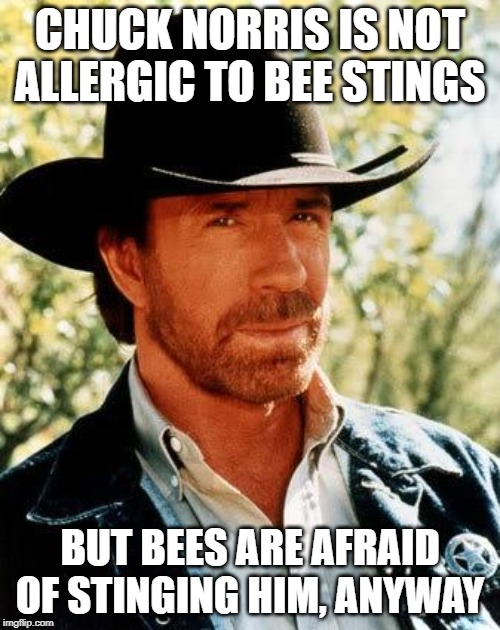 Chuck Norris |  CHUCK NORRIS IS NOT ALLERGIC TO BEE STINGS; BUT BEES ARE AFRAID OF STINGING HIM, ANYWAY | image tagged in memes,chuck norris | made w/ Imgflip meme maker