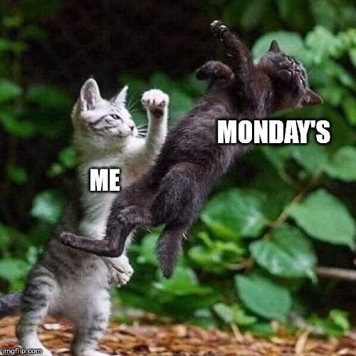 ME MONDAY'S | image tagged in cats,mondays,cat fight | made w/ Imgflip meme maker