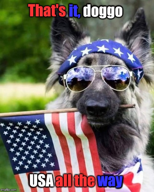 Patriot dog | That's it, doggo USA all the way it, doggo USA way | image tagged in patriot dog | made w/ Imgflip meme maker
