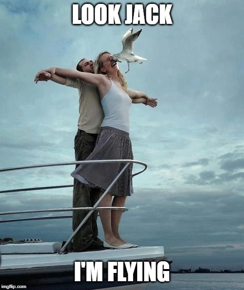 Sundays with Seagulls: Top 10 Seagull Memes - Rebecca ...