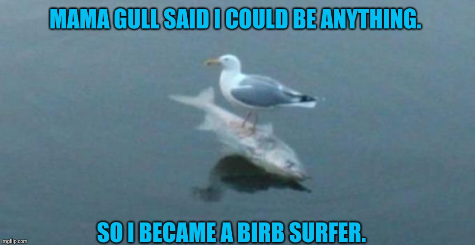 But mama gull never said you'd be a meme. | MAMA GULL SAID I COULD BE ANYTHING. SO I BECAME A BIRB SURFER. | image tagged in gull surfing on a fish,birb,surfing | made w/ Imgflip meme maker