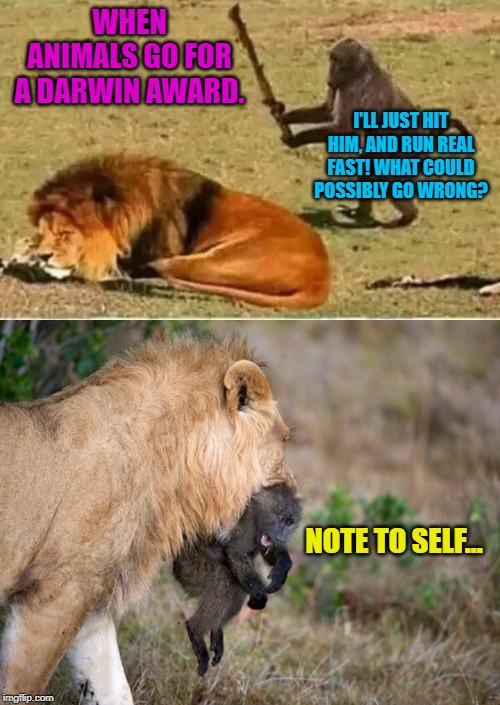 And he was never seen or heard from again! |  WHEN ANIMALS GO FOR A DARWIN AWARD. I'LL JUST HIT HIM, AND RUN REAL FAST! WHAT COULD POSSIBLY GO WRONG? NOTE TO SELF... | image tagged in bad decisions,animal kingdom,nixieknox,memes | made w/ Imgflip meme maker