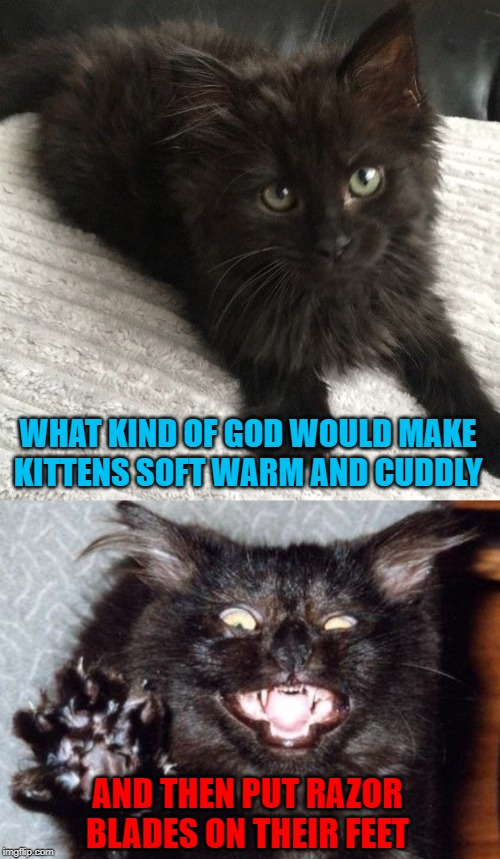 Cats may be cuddly but they're are still evil!!! | WHAT KIND OF GOD WOULD MAKE KITTENS SOFT WARM AND CUDDLY AND THEN PUT RAZOR BLADES ON THEIR FEET | image tagged in kittens,memes,cats,cuddly,funny,evil | made w/ Imgflip meme maker
