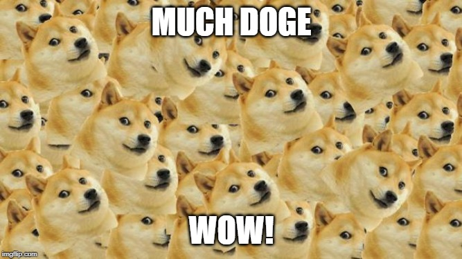Multi Doge | MUCH DOGE WOW! | image tagged in memes,multi doge | made w/ Imgflip meme maker