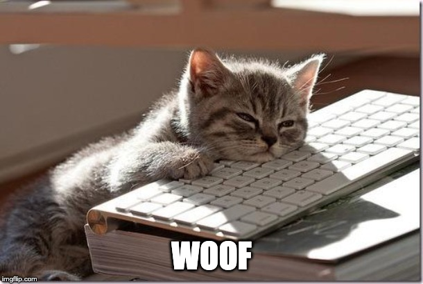 Bored Keyboard Cat |  WOOF | image tagged in bored keyboard cat | made w/ Imgflip meme maker