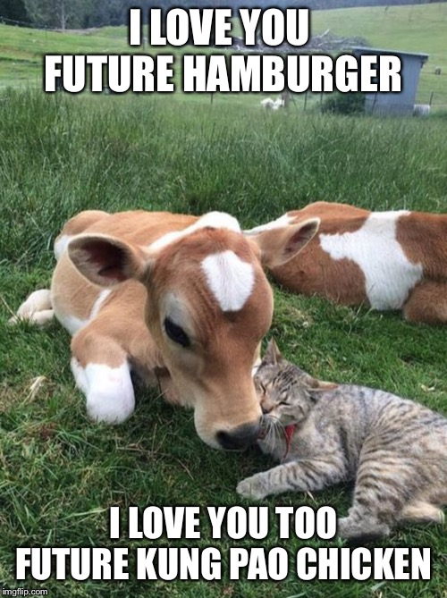 If you don't get it, look at the tags. | I LOVE YOU  FUTURE HAMBURGER I LOVE YOU TOO FUTURE KUNG PAO CHICKEN | image tagged in cat,cow,chinese food,mememakermemes | made w/ Imgflip meme maker