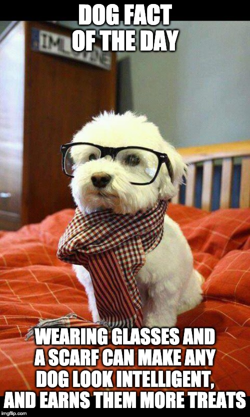 Dog Fact of the day | DOG FACT OF THE DAY WEARING GLASSES AND A SCARF CAN MAKE ANY DOG LOOK INTELLIGENT, AND EARNS THEM MORE TREATS | image tagged in memes,intelligent dog | made w/ Imgflip meme maker