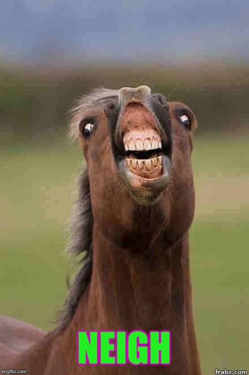 horse face | NEIGH | image tagged in horse face | made w/ Imgflip meme maker