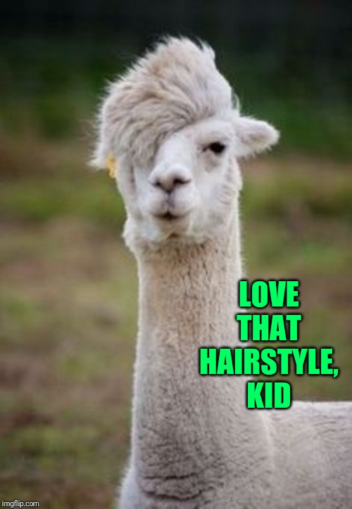 mohawk lama | LOVE THAT HAIRSTYLE, KID | image tagged in mohawk lama | made w/ Imgflip meme maker