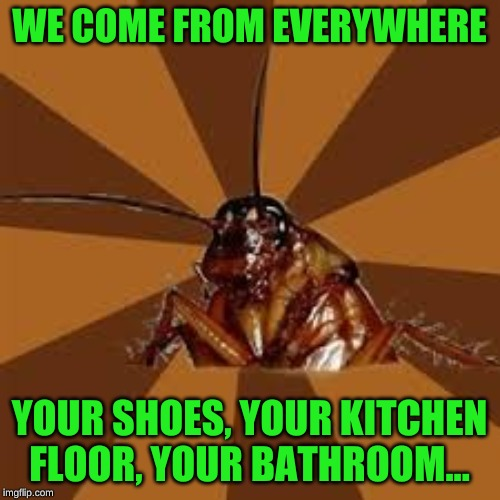 Cockroach | WE COME FROM EVERYWHERE YOUR SHOES, YOUR KITCHEN FLOOR, YOUR BATHROOM... | image tagged in cockroach | made w/ Imgflip meme maker