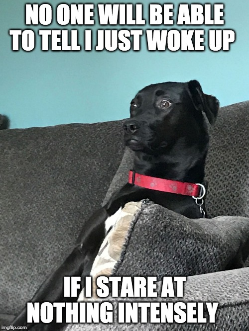 Just Woke Up | NO ONE WILL BE ABLE TO TELL I JUST WOKE UP IF I STARE AT NOTHING INTENSELY | image tagged in just woke up | made w/ Imgflip meme maker