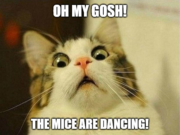 Cat Oh my gosh! | OH MY GOSH! THE MICE ARE DANCING! | image tagged in memes,scared cat,animals,cat,mice | made w/ Imgflip meme maker