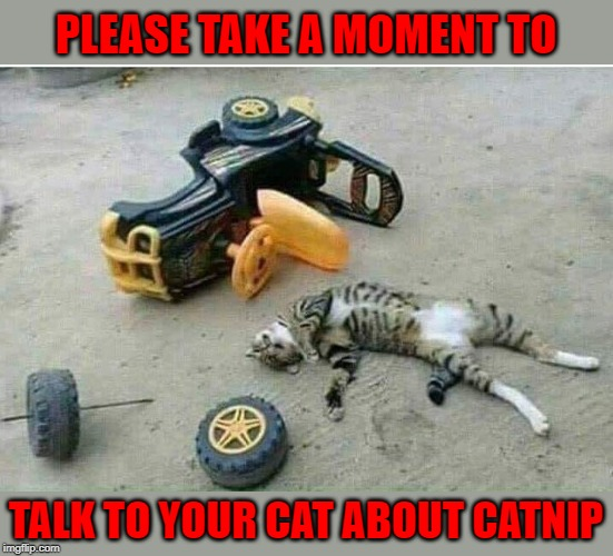 A Public Service Announcement... | PLEASE TAKE A MOMENT TO TALK TO YOUR CAT ABOUT CATNIP | image tagged in catnip kills,memes,cats,accidents,funny,catnip | made w/ Imgflip meme maker