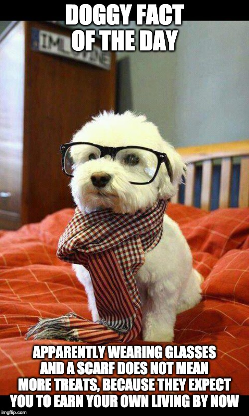 Doggy fact of the day | DOGGY FACT OF THE DAY APPARENTLY WEARING GLASSES AND A SCARF DOES NOT MEAN MORE TREATS, BECAUSE THEY EXPECT YOU TO EARN YOUR OWN LIVING BY N | image tagged in memes,intelligent dog | made w/ Imgflip meme maker
